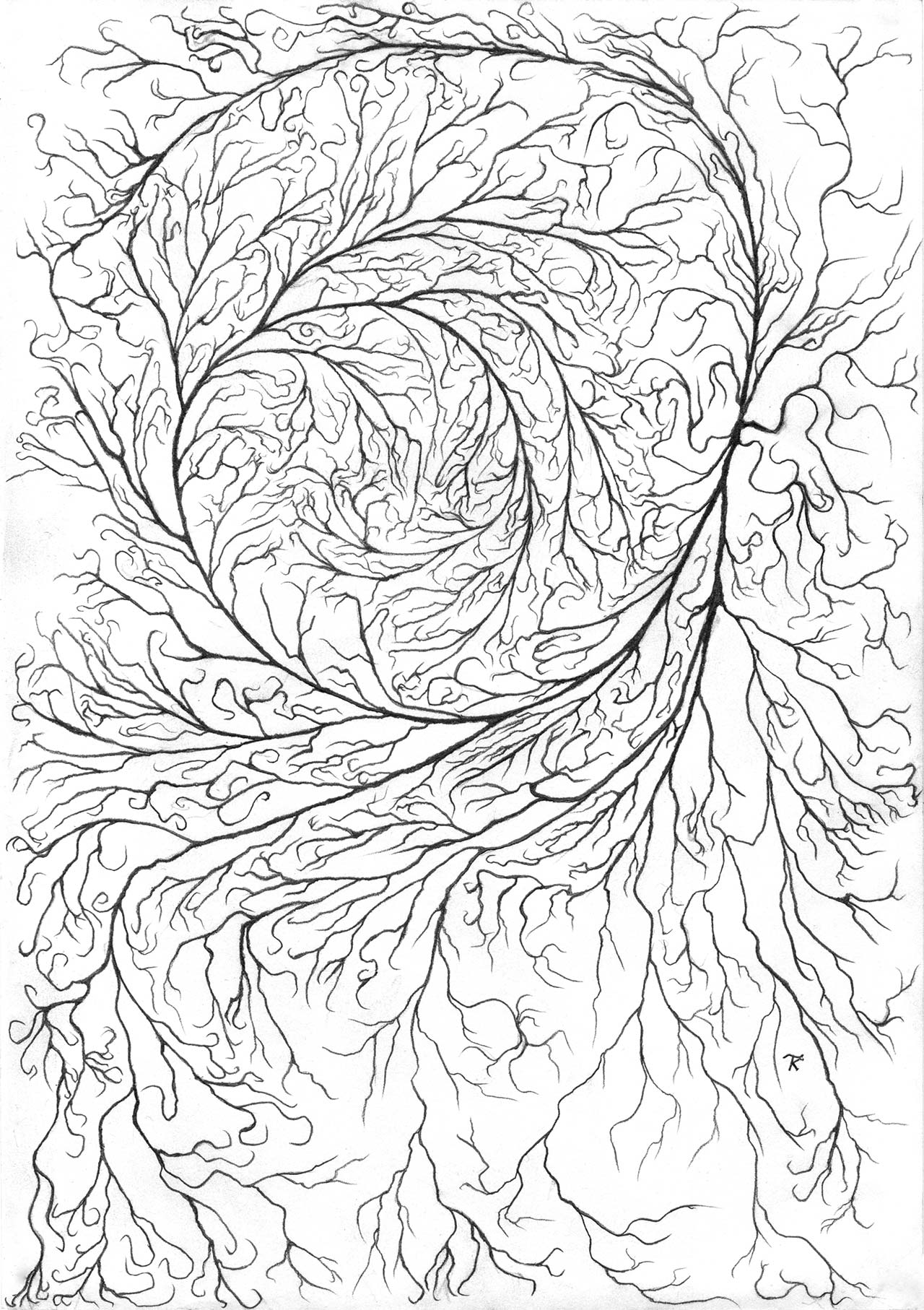 Roots drawing